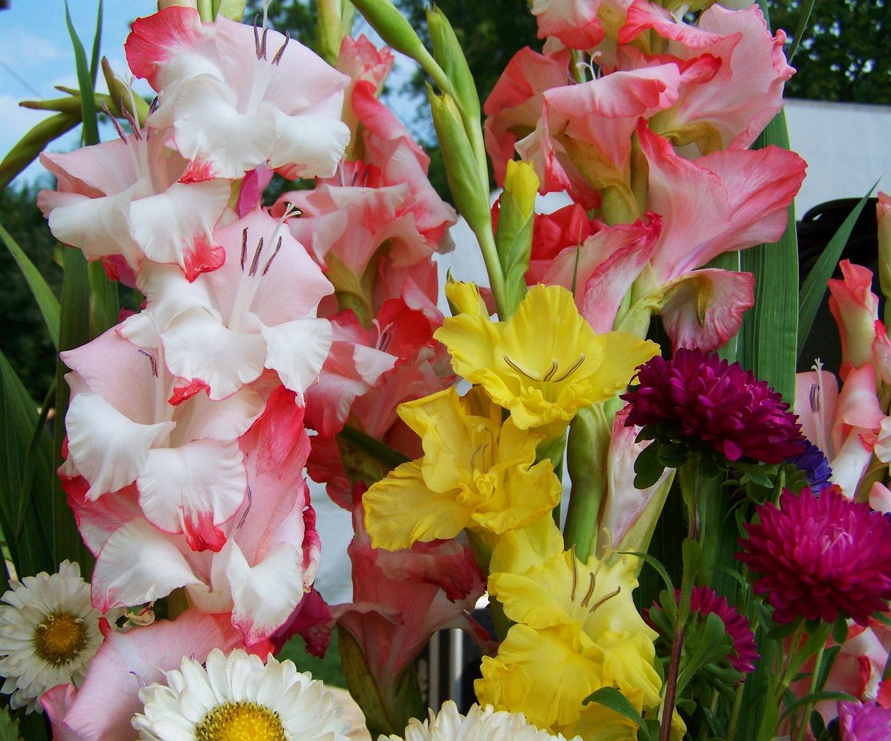 картинки гладиолусы цветы букеты сделать деревянную