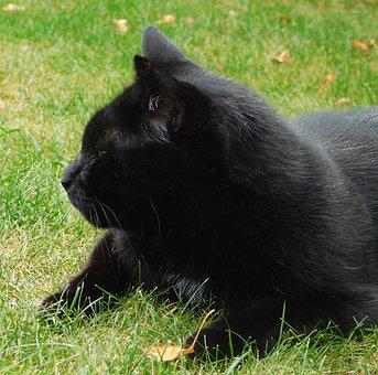 zadarmo čierny zrelé mačička Gay porno ženatý muž