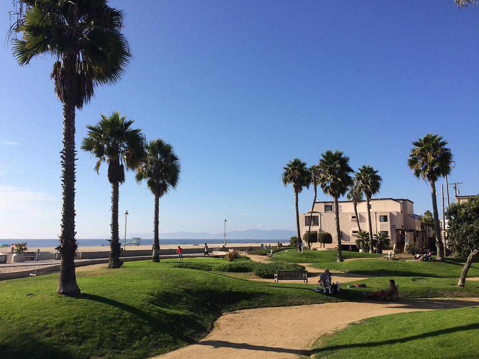 California Beach Palms Landscape Hermosa