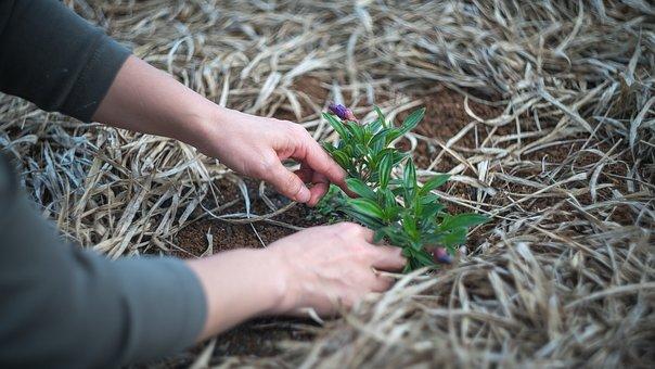 ガーデニング, 植物, 庭, 自然, 植木屋, 女性, ヤード, 裏庭