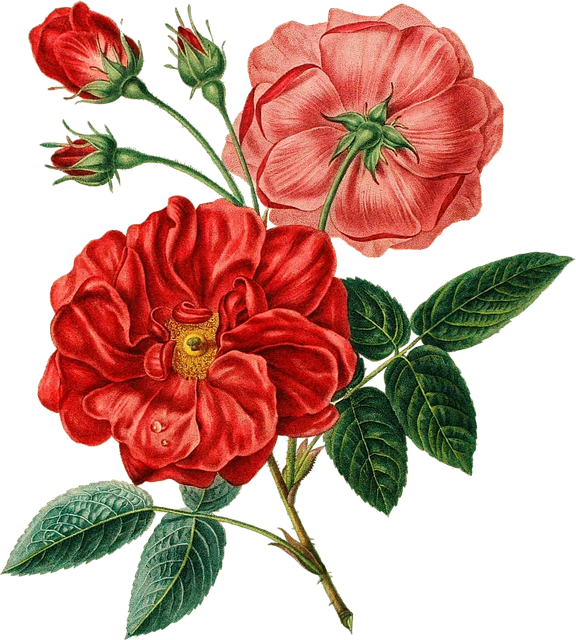 red rose vintage 183 free image on pixabay