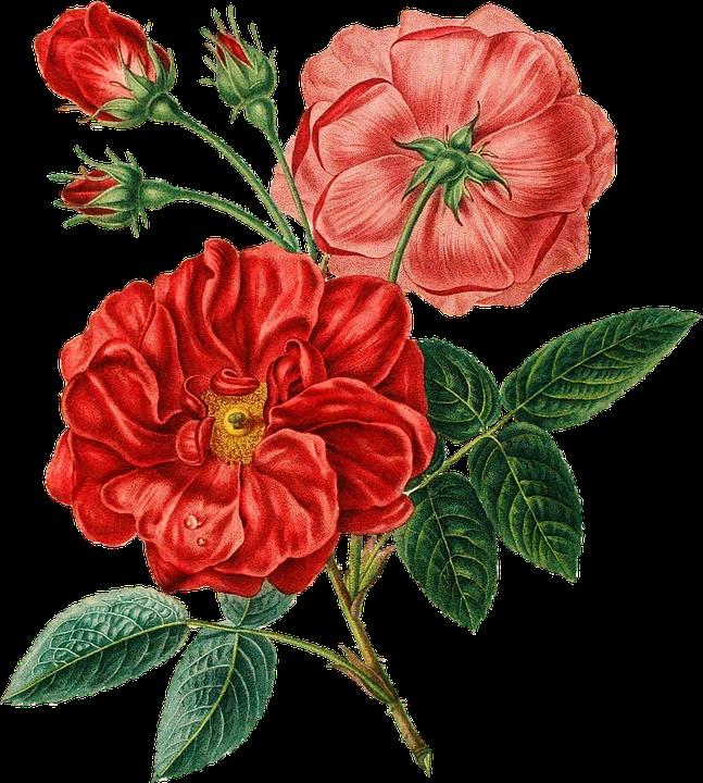 Red Rose Vintage - Free image on Pixabay