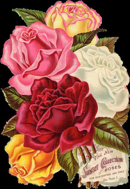 red rose vintage 183 free image on pixabay