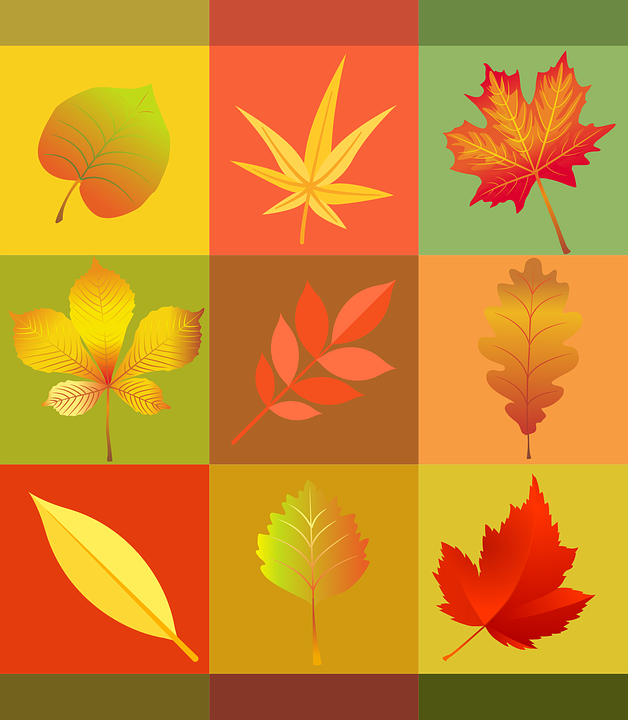 25  best ideas about Autumn color palette on Pinterest   Fall ...