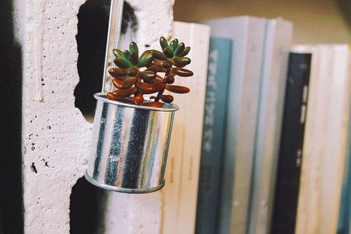 植物, サボテン, 鉢植え, 本, 本屋無事