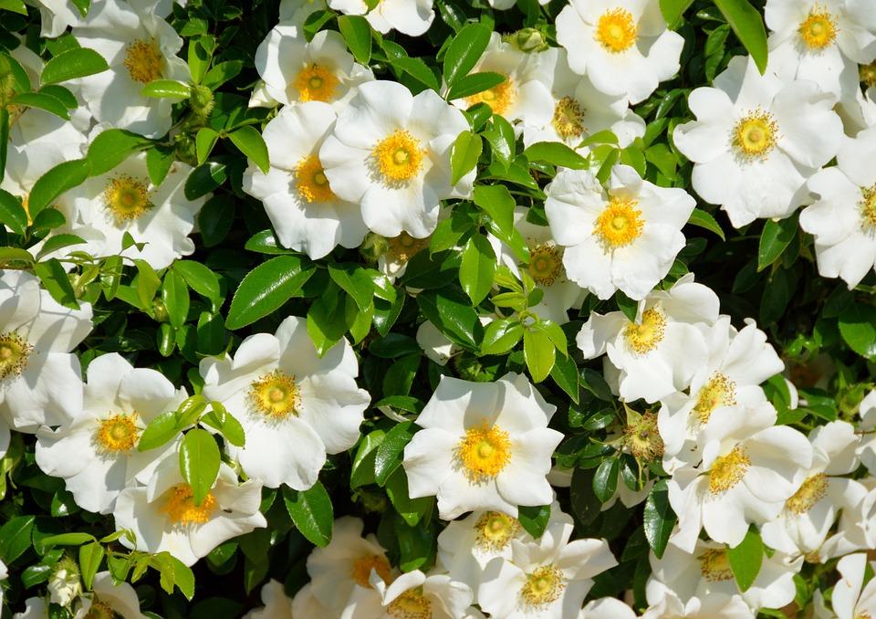 10 Best Fertilizer For Gardenias In Pots 2020 [Reviews - Guide]