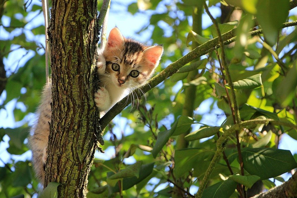 Cat, Kitten, Tree, Curious, Tabby, Feline, Animal