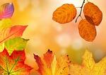 jesień, liście, kolorowe