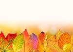 autumn, leaves, colorful