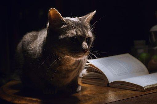 猫, 动物, 宠物, 首页, 夜, 书, 家养, 房子, 表