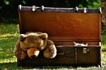 luggage, antique, teddy