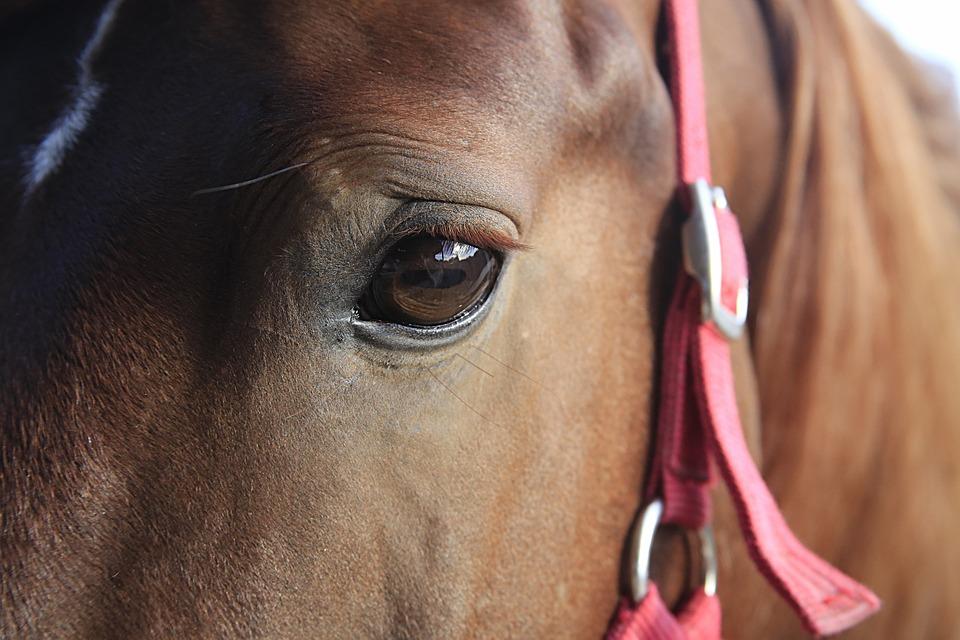 Photo gratuite cheval t te gros plan quid image - Image tete de cheval ...