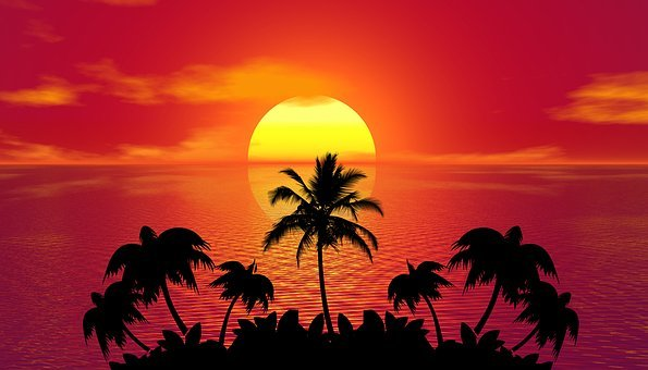Sunset, Palm Trees, Silhouettes