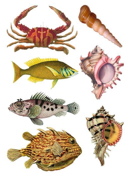 4500 Koleksi Gambar Kolase Hewan Laut HD Terbaru