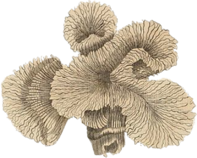 coral vintage plant  u00b7 free image on pixabay
