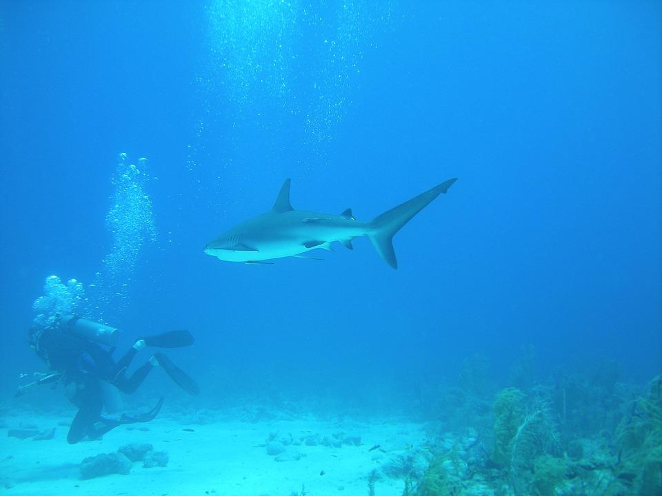 Plongée, Nassau, Bahamas