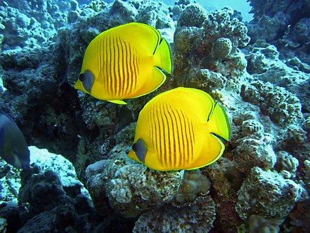 Diving, Underwater, Water, Fish, Yellow