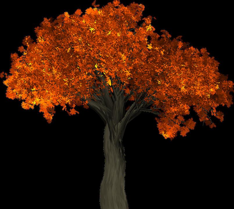 Tree  Leaves Autumn Free image on Pixabay