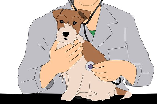 Vet, Animal, Illustration, Love