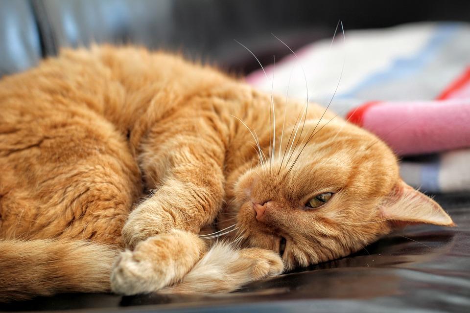 Katze Rote Kitten 183 Kostenloses Foto Auf Pixabay