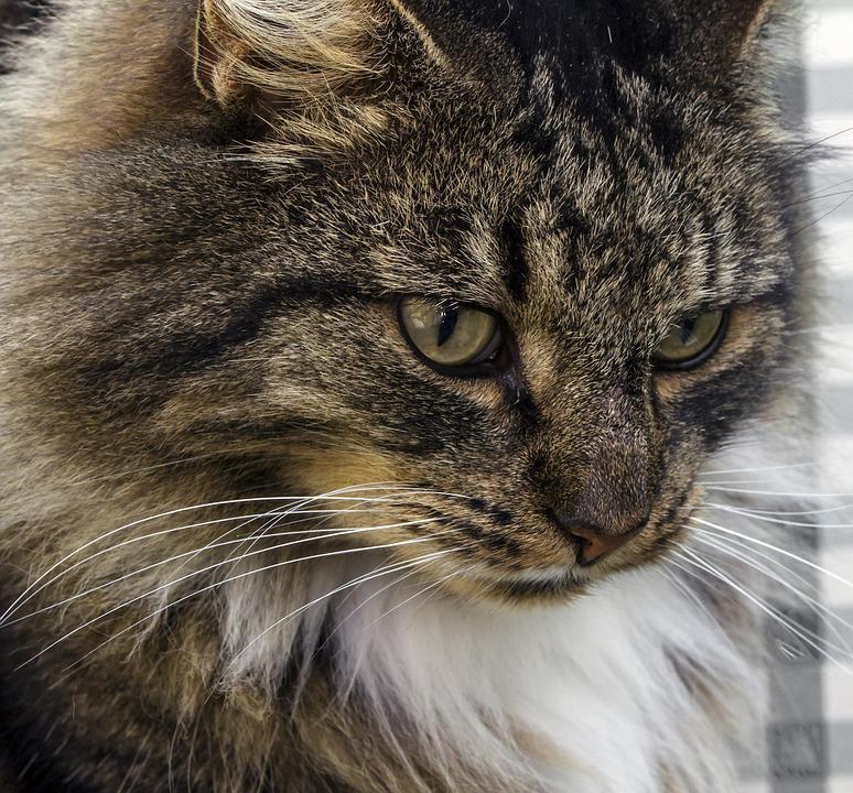 cat people oslo gratis sms norge
