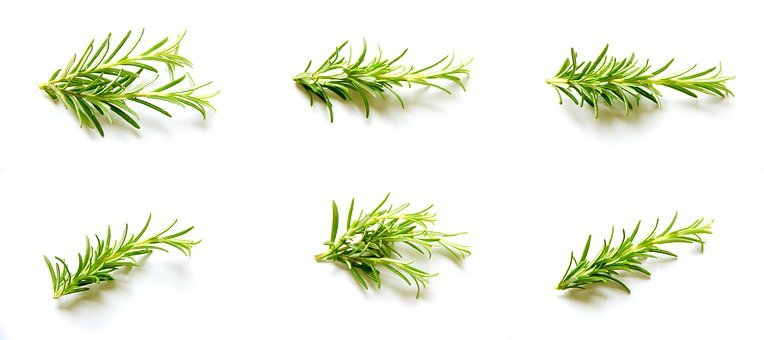 Rosemary, Set, Collection, Natural