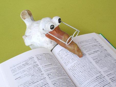 School, Book, Knowledge, Study