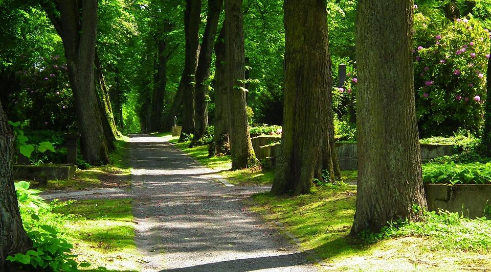 휴식, 떨어져, 자연, 경치, 공원, 녹색, 산책, 여름