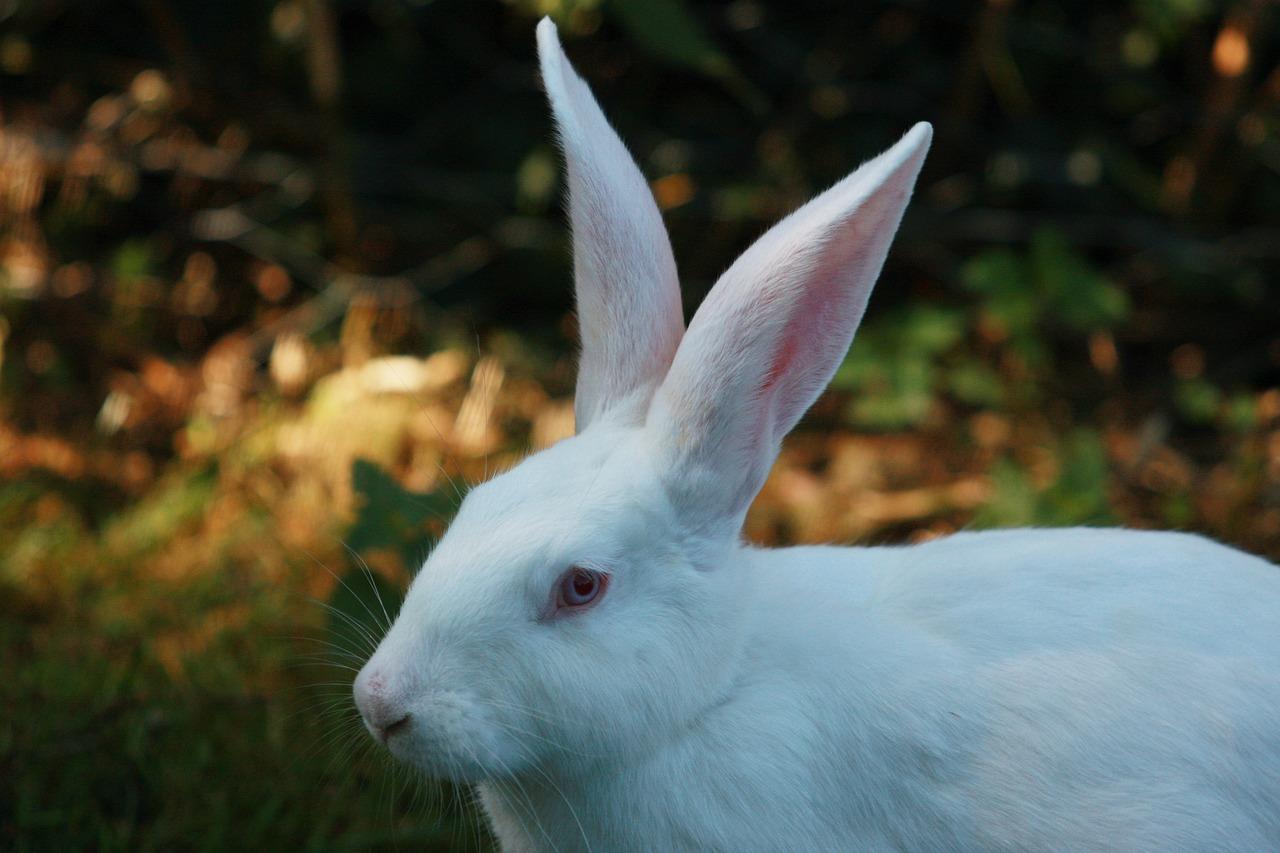 второй герой фотография белого зайца ответ
