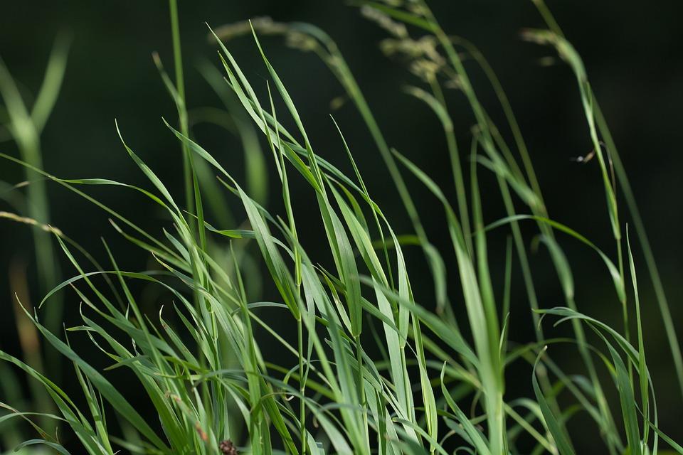 Gras Grün Gräser Kostenloses Foto Auf Pixabay