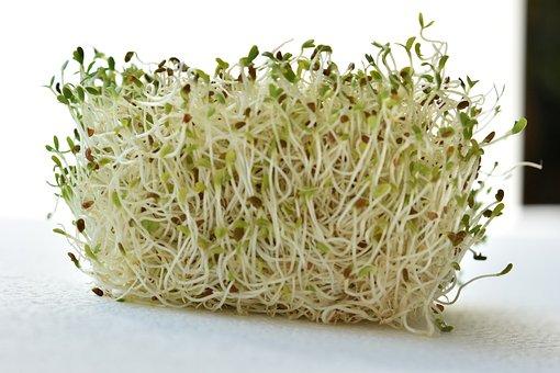 utilidad de la alfalfa