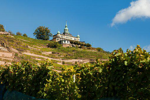 Radebeul, Spitzhaus, Weinberg, Weinanbau