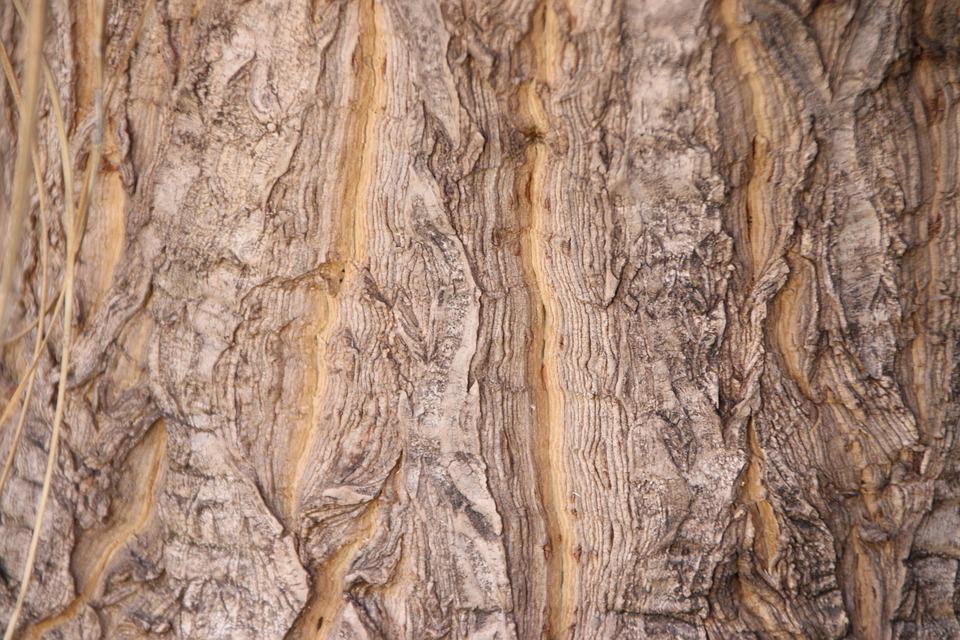 10 best Tree Bark images on Pinterest   Tree bark, Trees and Branches