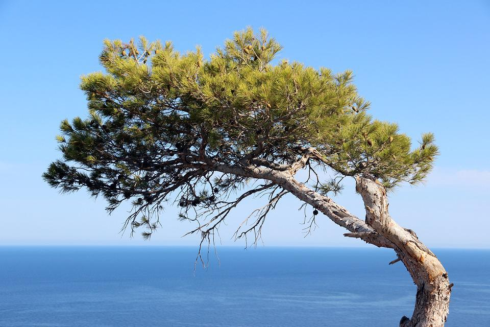 Tree Water Sky Lanape Lake Wild Haunting Pine