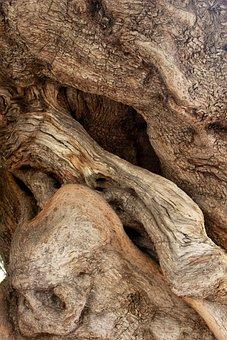 300+ kostenlose Olivenbaum und Oliven-Bilder - Pixabay