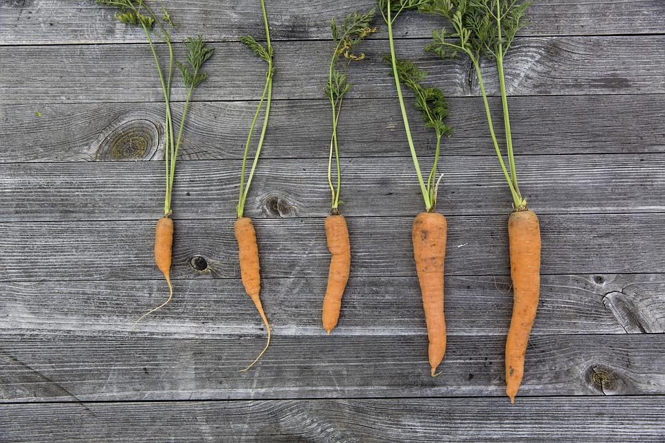 Produtos Hortícolas, Colheita, Cultivo, Ação De Graças
