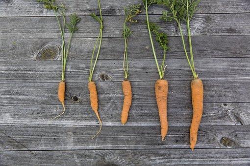 野菜, 収穫, 栽培, 感謝祭, 庭, 新鮮, ニンジン, 人参, カラフル
