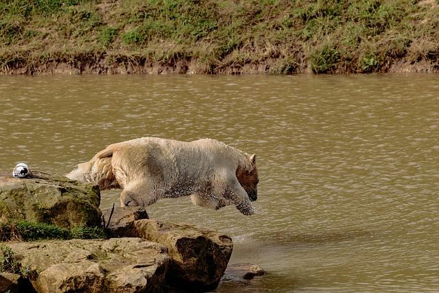 Foto gratis orso polare big bear white immagine