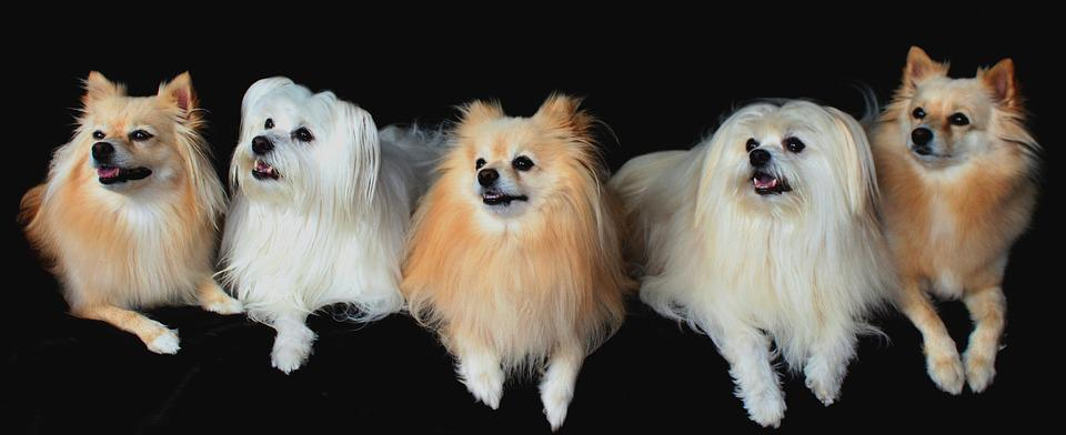 The Most Beautiful Dog Breeds: Parade of Beauty