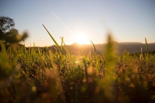 Grass, Meadow, Sun, Green, Summer