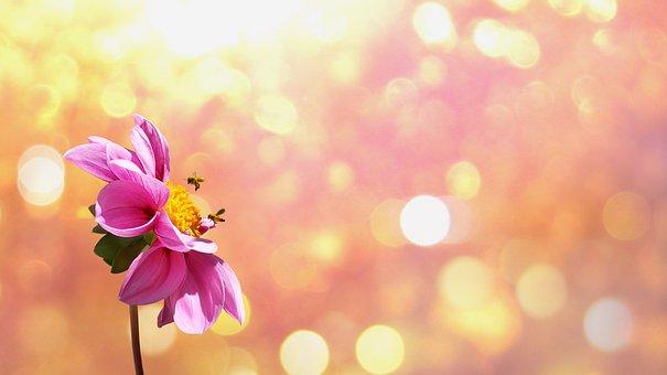 花, ブルーム, オレンジ, 植物, 自然, 花序, 美しい, 日当たりの良い