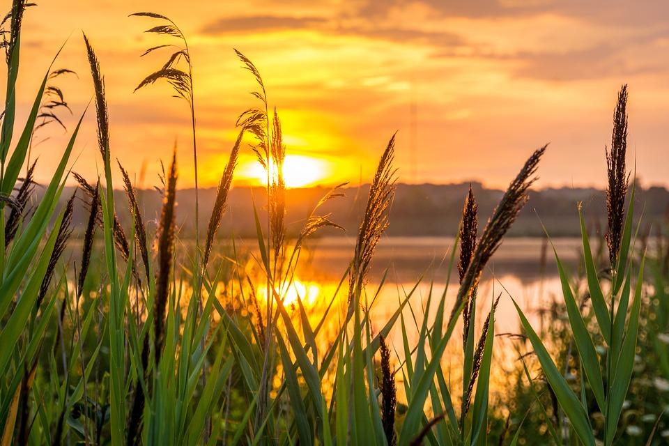 Sunrise, Hope, Morning, Nature, Meditation, Summer