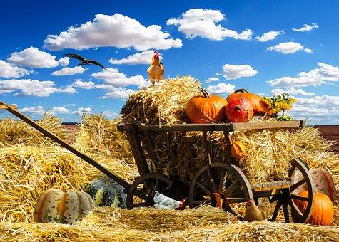 Erntedankfest, Herbst, Kürbis, Erntedank