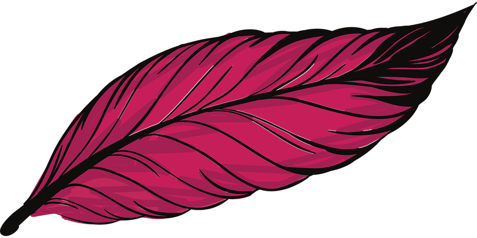 Pluma Plumas Ave · Gráficos Vectoriales Gratis En Pixabay