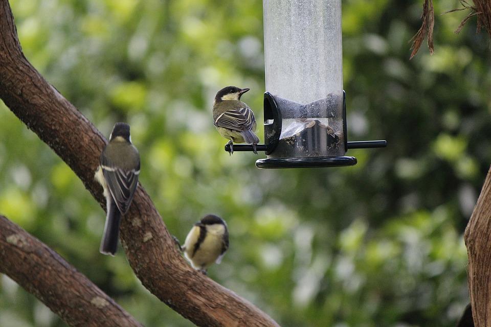 veľké prsia 2 vtáky
