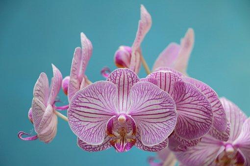 Orquídea, Purple, Flor, Bloom, Violeta