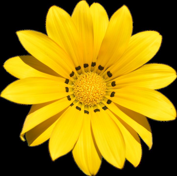 Transparent Flower Summer Free Photo On Pixabay