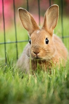 Hare, Animal, Green, Eskers, Rabbit