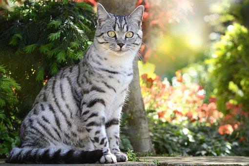 Katze, Schmetterling, Hauskatze