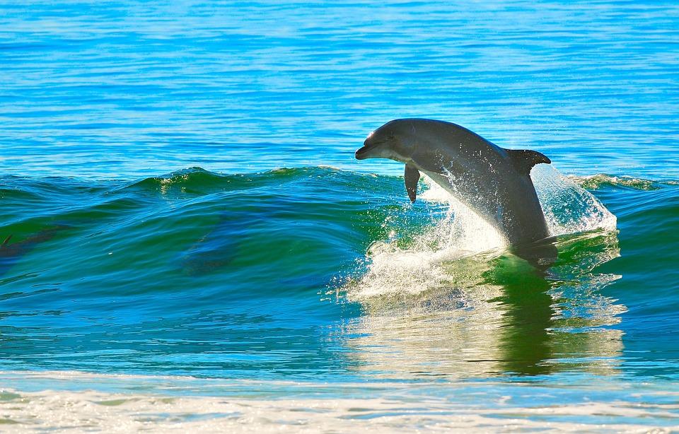 Delfín, Oceán, Vlna